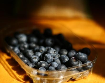 Blueberry Mania