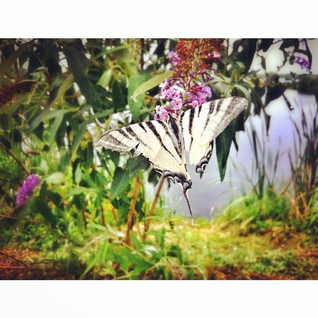 A little bit of paradise #macro #butterfly #nature #naturephoto #iphoneonly #iphoneography #comana #naturereserve #romaniamagica