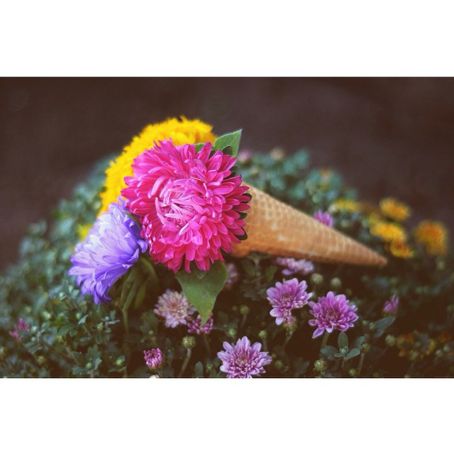 Check out our #indiansummer post on the blog (link on profile) #details #dessert #flowers #filmphoto #style #autumn